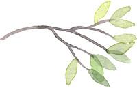 Green_branch_medium