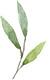 Green_trio_leaves